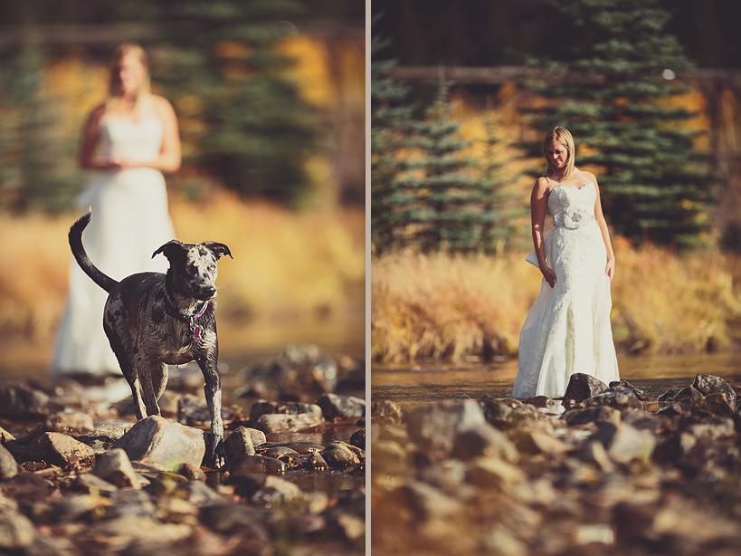 Wedding Bride & Dog